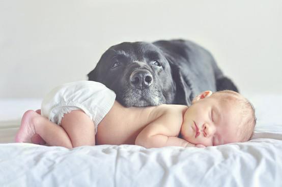 bebe-chien