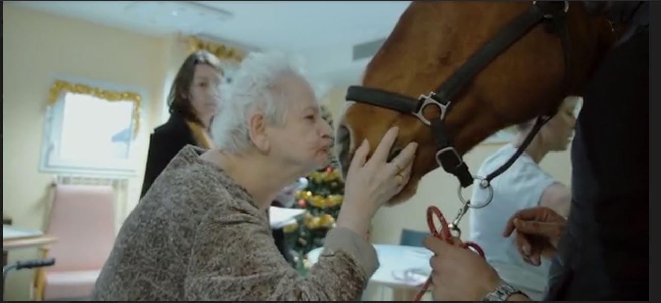 Peyo, cheval de coeur 23